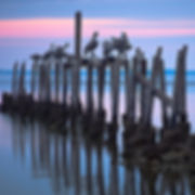B286 - Pelicans on pilings - 300x300.jpg