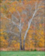 _1FX9360 - Glory Tree - revision 2 - NIK