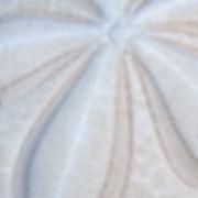 Sand Dollar - 300x300.jpg