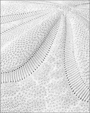 Sand Dollar - _1FX8161 - NIK -  Topaz -