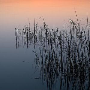 _LAN5174-2-Sea Grass at Dusk - 300x300.j