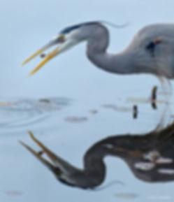 B302-GBH eating tadpole-NIK - 2000.jpg