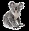 koala-bear-lmr.png