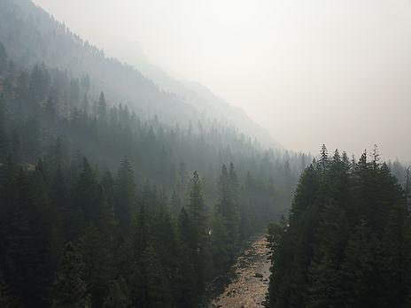 Smokey Levanworth Forest.jpg