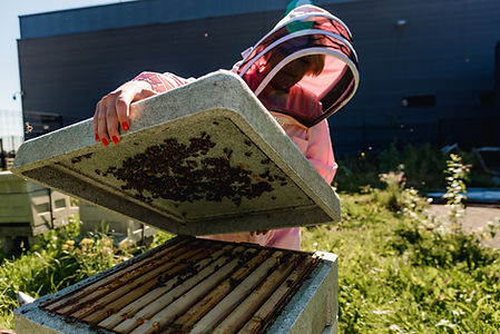 Vegan beekeeper tending to her bees during Liverpool brand shoot.