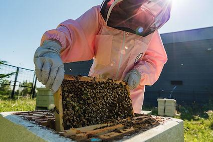 Beekeeper Personal Branding Shoot 5.jpg
