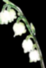 月経カップ フルムーンガール ムーンカップ 生理用品