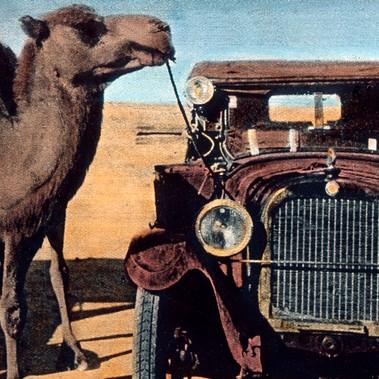 Mezzi di trasporto moderni e arcaici: un cammello legato a un'auto