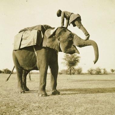 """Il """"mamut"""" sale sull'elefante"""