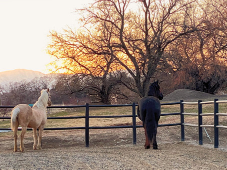 Warm Weather Brings Happy Horses