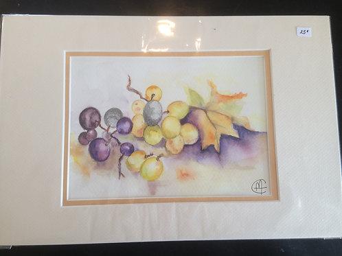 Aquarelle 080 MH raisins