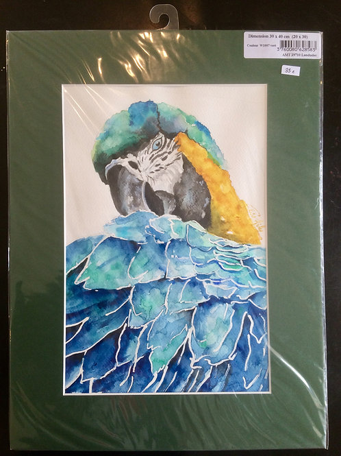 Aquarelle 014 Perroquet