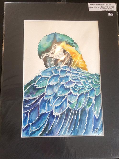 Aquarelle 075 MH perroquet