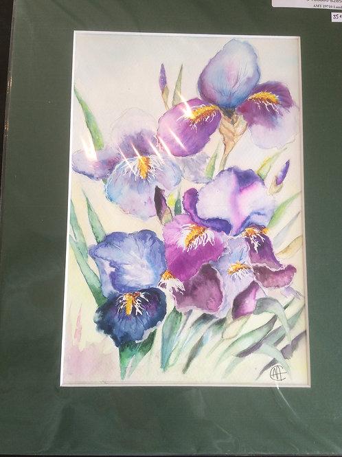 Aquarelle 072 MH fleurs