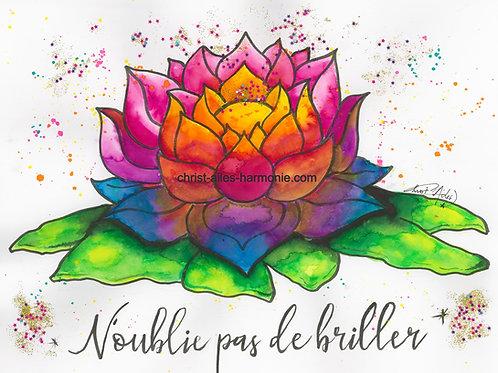 055 Lotus citation