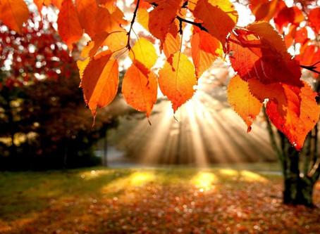 Jesen je čas, da se umirimo in polno zadihamo