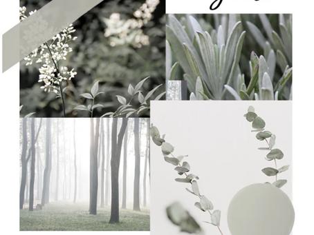 Eucalyptus and You