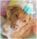 Wicki de social media hond