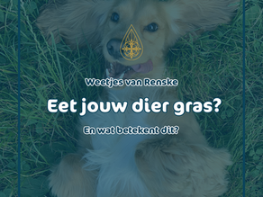 Eet jouw hond wel eens gras?