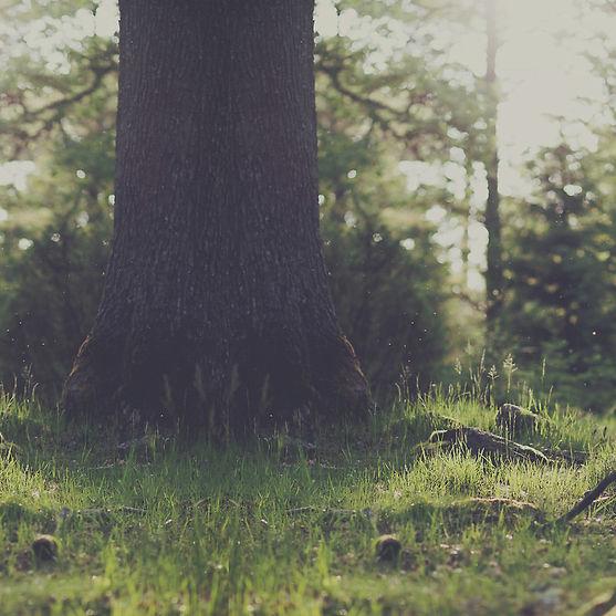 Tree Stump_edited.jpg