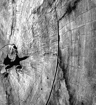 Kyoto wood_bw2.jpg