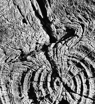 White moss woods_bw2.jpg