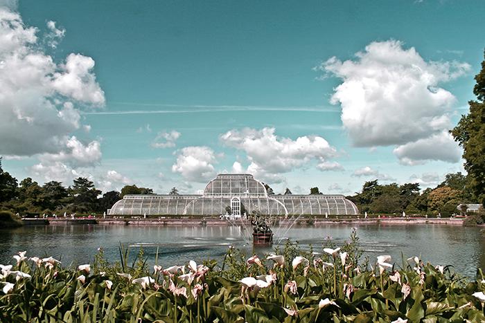 Kew Garden Jasmine 1 2