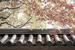 Kyoto wood 12