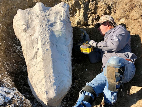 Large fossil find in EBMUD  land