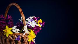 Quelles fleurs peuvent me soutenir ? Offrez-vous une Cure Florale !