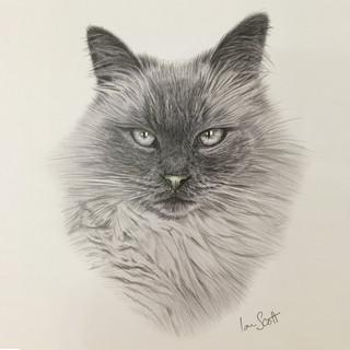 Cat II.jpg