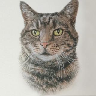 Cat IV.jpg
