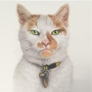 Cat I.jpg