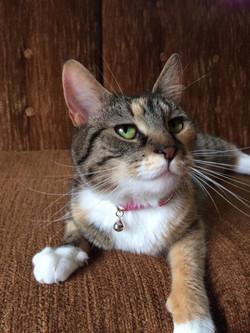 Sophie (Marmelade)