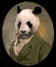 Panda édition limitée