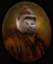 Gorille édition limitée