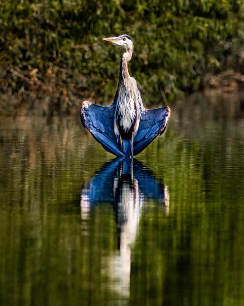 A Heron Reflection