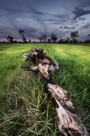 Rice Fields of Isaan, Roi Et, North Eastern Thailand