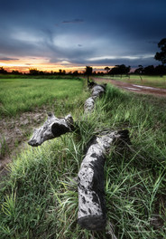 Rice Fields of Isaan, Roi Et City, North Eastern Thailand.
