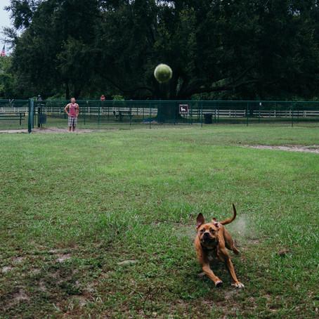 Opal and Juliette | My dog's Adventures | Leesburg, Florida