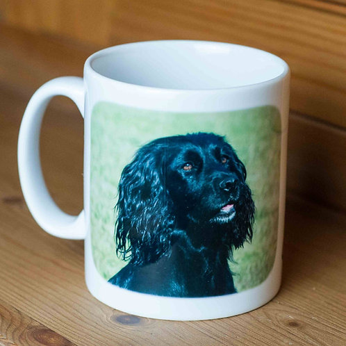 Black Working Cocker Spaniel