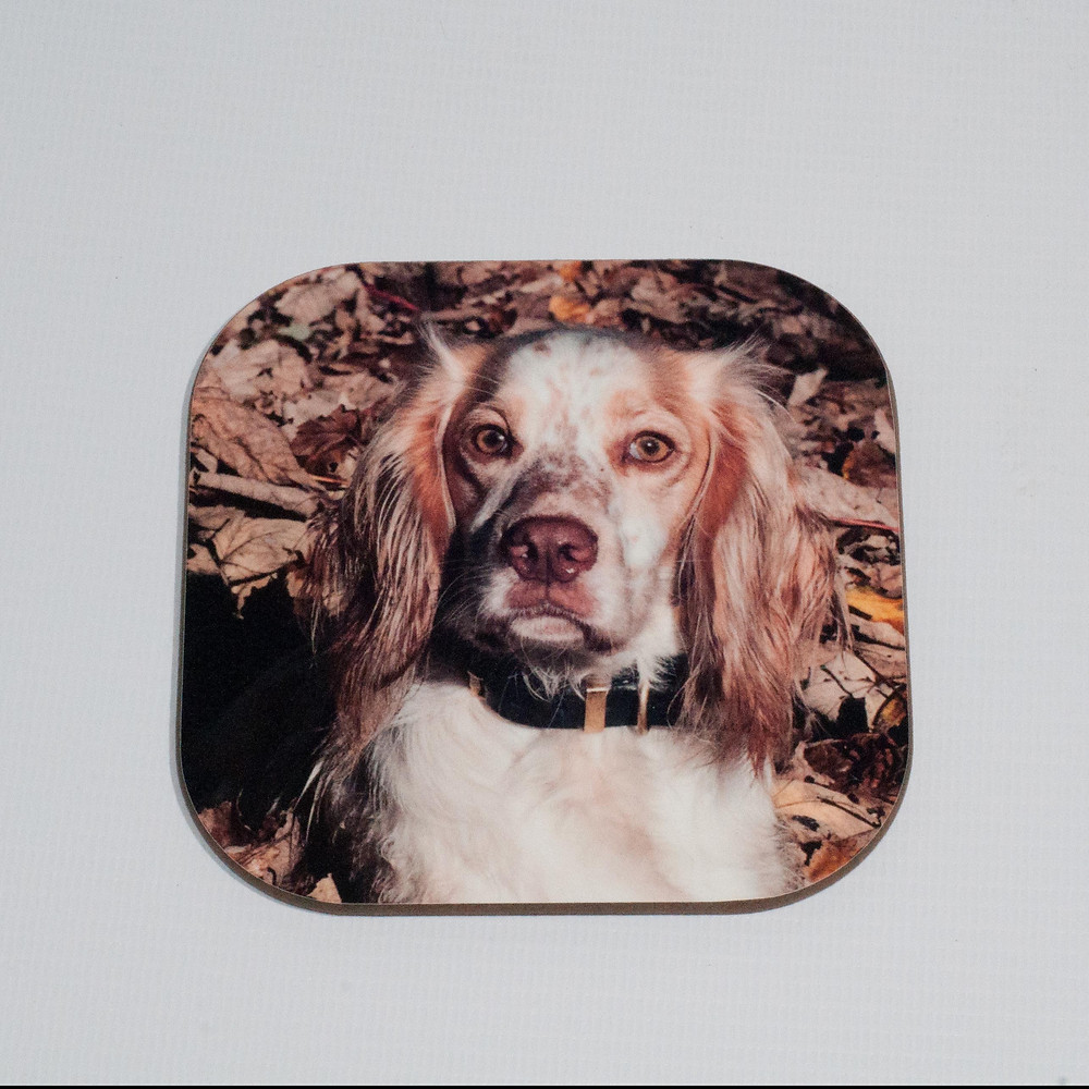 Working Cocker Spaniel Coaster