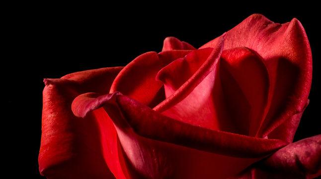 bloom-blossom-close-up-57423.jpg