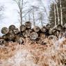 Vores primære råvare er træ