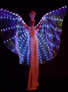 LED Mariposa Video clip.mp4