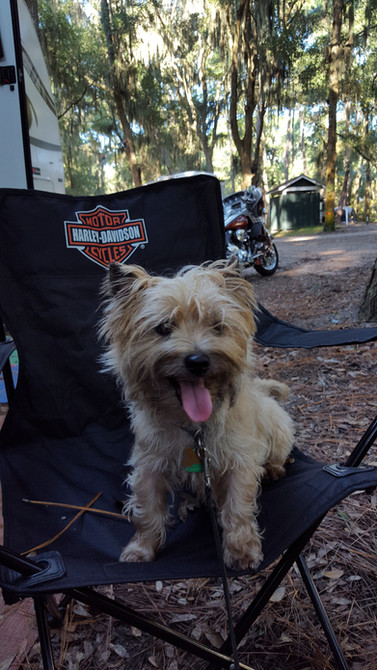 Dirty Harry attends the GA State HOGS Rally at Jekyll Island!