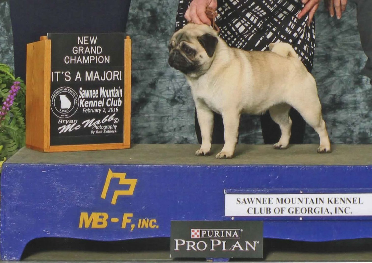 Grand Champion Pippa