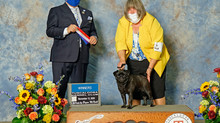Puddin' earns her first point in Alabama Dog Show