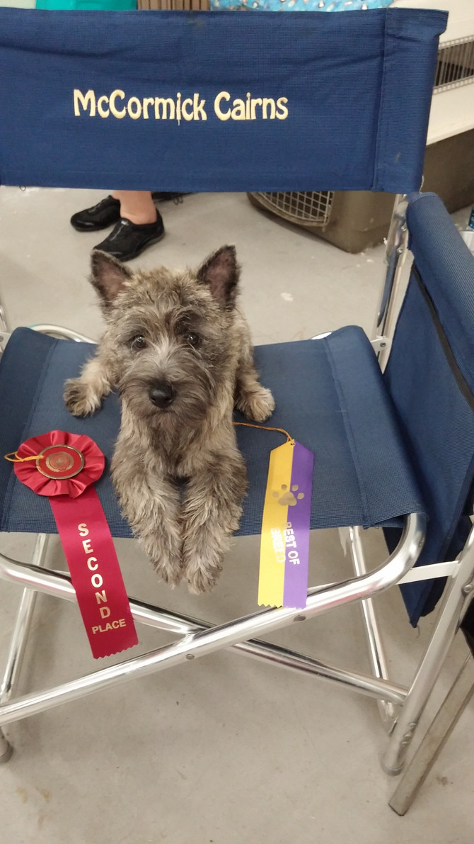 Elsa does great at her first show!