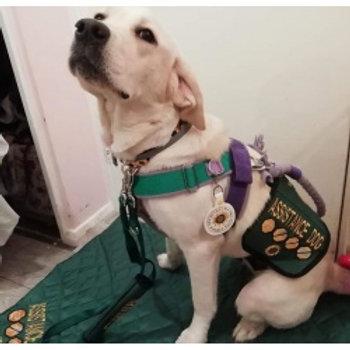 Custom Made Dog Vest for Assistance Dogs